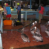 Puerto Ayora's fish market - nearly every guide book lists it as a recommended spot to see birdlife