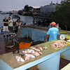 The action at the Puerto Ayora fish market.  This scene was exactly what I'd hoped to experience in Galapagos.