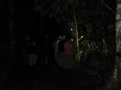 flashlights shine during our night walk through the jungle