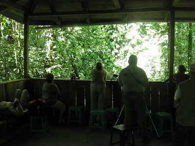 Chillin in the hide waiting for the parakeets to come down to the clay.