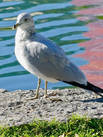 Seagull Taking Sun