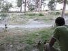 Visiting ducks at our cabin on Lake Tekapo