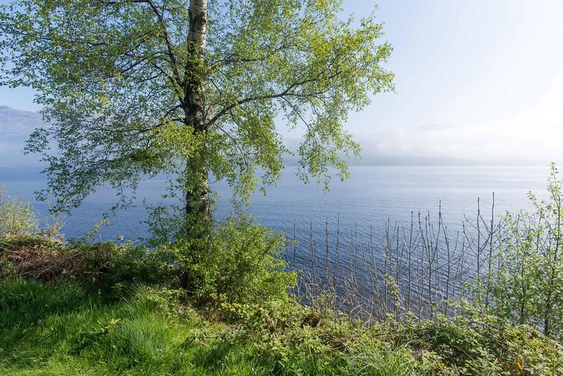 Sunny morning at Loch Lormond