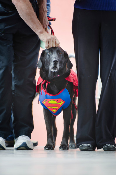 Dog of Steel at Woofstock in Toronto, 8 June, 2013.