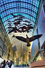 The installation of Canada geese, called Flightstop by artist Michael Snow. At the Toronto Eaton Centre. Shot 21 Feb, 2013.