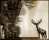 Stag on a wall. Toronto 12 February, 2013.
