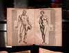 This is Von des Menschen Corpers Anatomey, ein kurtzer, aber vastnutzer Asszug, commonly referred to as the Epitome, by anatomist Andreas Vesalius, 1543. This is one of only two known copies of this German-language edition of the famous anatomy text. Shot this one yesterday — at Thomas Fisher Rare Book Library, University of Toronto. 24 May, 2014.