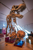 Rawrrr! T-Rex with smaller T-Rex and Triceratops skulls. Shot this 3 January, 2014 at the Royal Ontario Museum in Toronto. Love the dinosaur room at the ROM.... just wish they'd dust a bit more often :-)