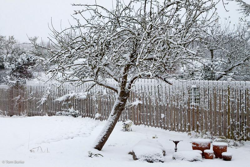 Back garden, Dec 2009