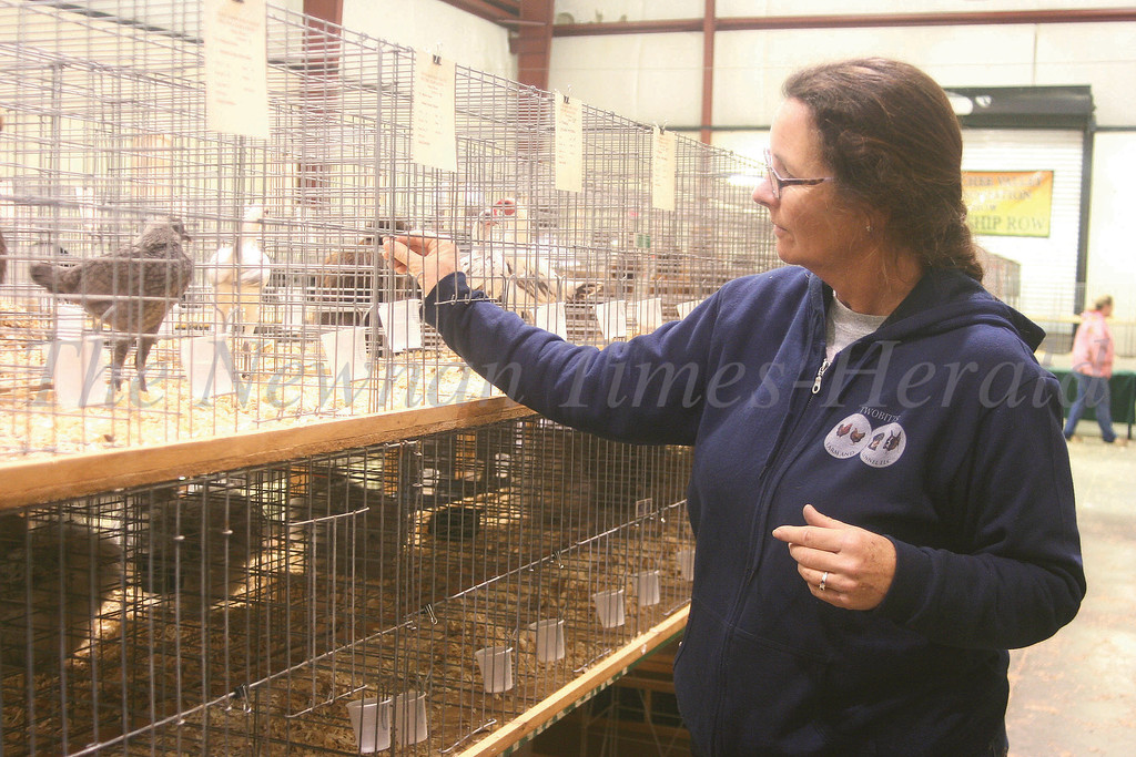 Jennifer Bittner straightens the tail of one her chickens that competed in the annual Chattahoochee Valley Poultry Association show on Saturday..