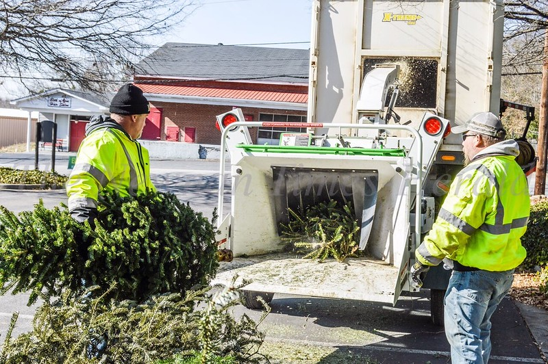 Scott Gann, left, and Chad King of the Newnan Public Works Street Department feed old Christmas trees into the wood chipper.  The equipment turned the trees into mulch that will be used in Keep Newnan Beautiful's Pollinator Garden on 14 Carmichael Street.