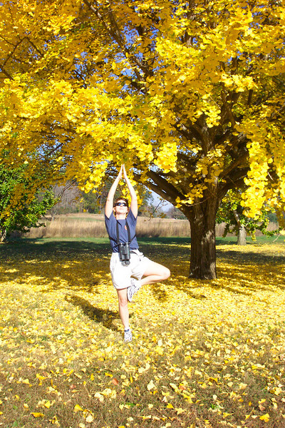"""Patti is inspired to strike the """"tree pose"""" in honor of this stunning gingko."""
