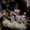 Harbinger of Spring - February 29, 2020, Cherokee Park