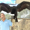 Andean Condor - he's demonstrating its wingspan, which is quite impressive.