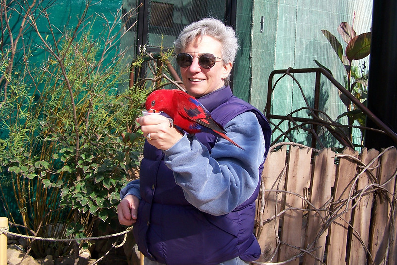"Zoo visit - Oct 22, 2005:  Jeane entertains the Lorikeet named ""Big Red""."