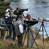 Photographers lining the Madison River for a pair of otters
