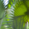Palm fronds, Lensbaby soft focus