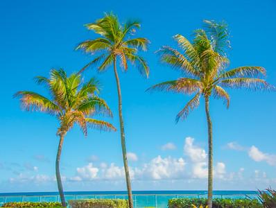 Palm Beach 137