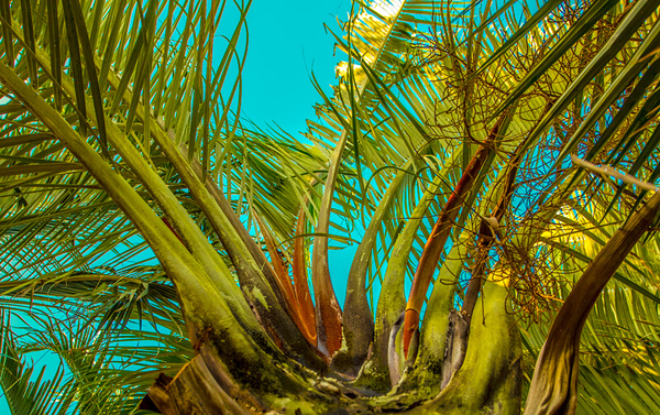 Palms Fronds 18