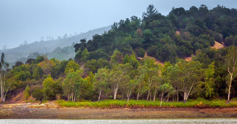 Shoreline of Lexington Reservoir, Los Gatos.
