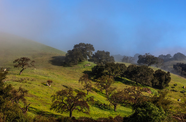 Misty Hills near Hollister