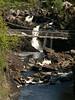 Rogie Falls nr Contin