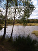 Small lochan near Boat of Garten designated as a nature reserve.