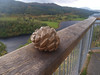 Wood carving, viewpoint - Queen's View.