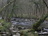 The River Barle in the Tarr Steps Nature Reserve, Exmoor
