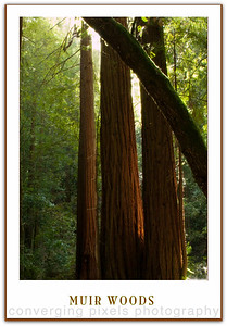 Muir Woods National Park