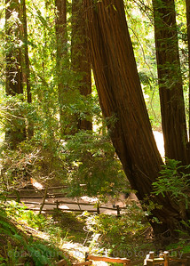 5727 Muir Woods National Park