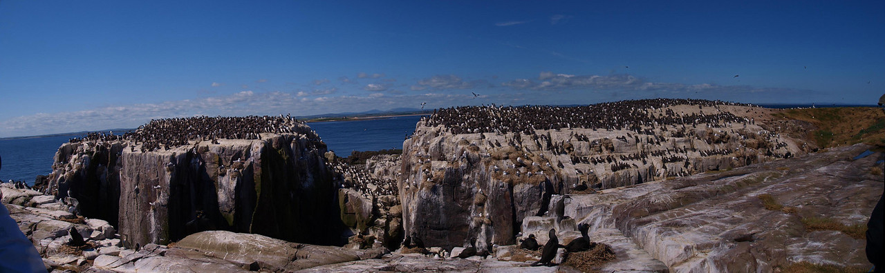 Staple Islands National Trust Bird Colony.