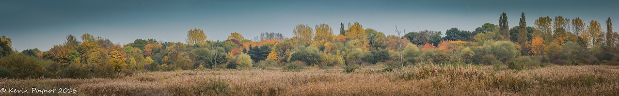 Autumn Colours over the Reed Bed - Brandon Marsh, Coventry