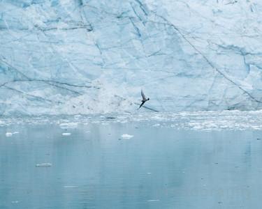 """Glacier Bay National Park, Alaska.  """"Glacier Bay #4"""""""