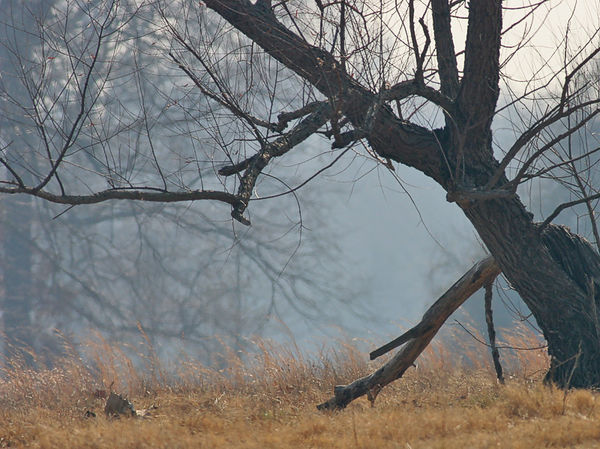 Smoky here. Taken 28 December, 2005. We need rain bad! To many fires here in Northeast Texas, and Southeast Oklahoma.
