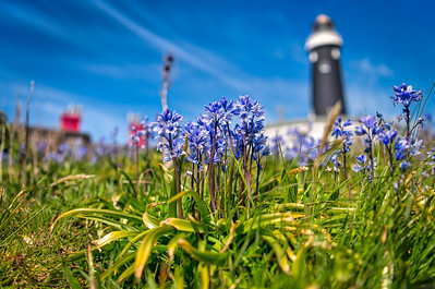 Bluebells and Lighthouses