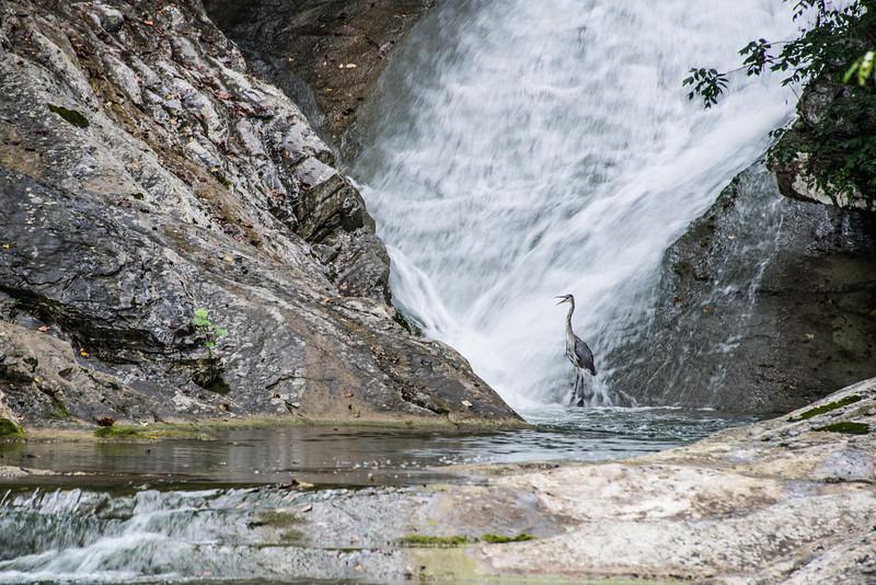 Lace Waterfalls