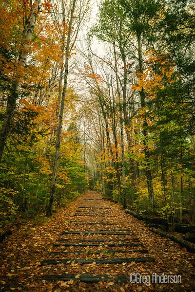 Pemigewasset Trail