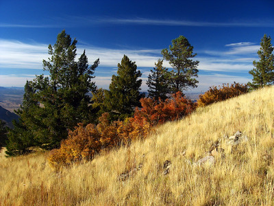 Fall colour on the crest of New Mexico's Magdalena Mountains, October 2007.