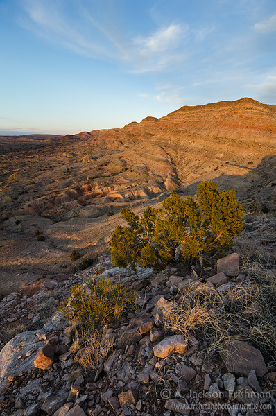Golden sunset in the Sierra de las Cañas Wilderness Study Area, eastern Socorro County, New Mexico, February 2012. edit