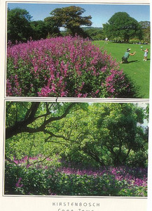 20_Cape_Town_Kirstenbosch_Botanical_Gardens