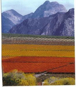 33_Franschhoek_The_Cape_Win_ Route_Rex_River_Valley