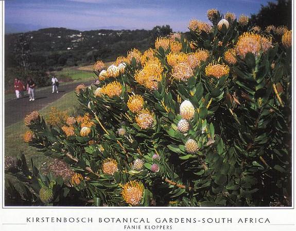 17_Cape_Town_Kirstenbosch_Botanical_Gardens