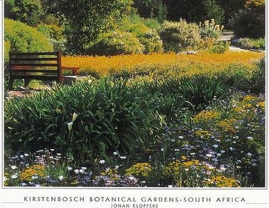 16  CT_Kirstenbosch_BG_Fantastic_floral_displays