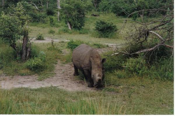 08_Safari_photos_Rhinoceros