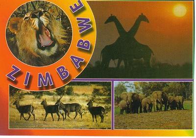 01_Zimbabwe_Lion_Girafe_Waterbuck_Elephants
