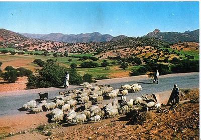 019_Maroc_Typique_Le_berger_et_ses_Moutons
