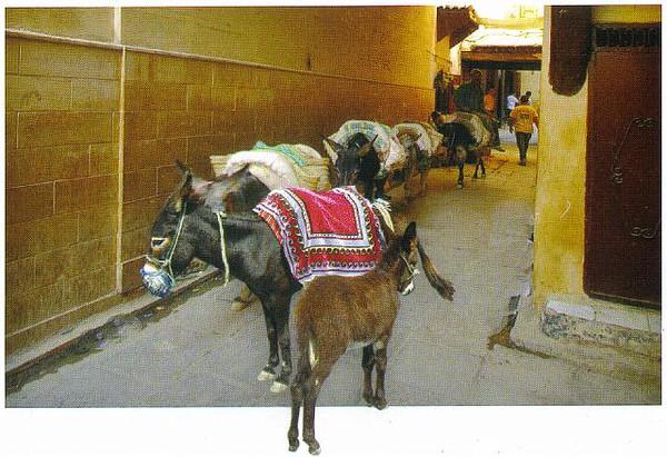 020_Maroc_Typique_Ane_dans_la_medina
