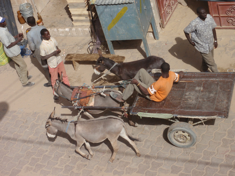115_Timbuktu  The Grand Marche  Donkey Cart to Carry the Goods