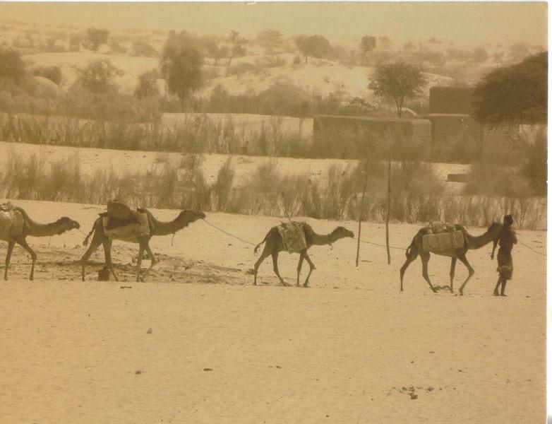 037_Salt Caravan  35 Days  1500 km to Taoudenni and back Timbuktu